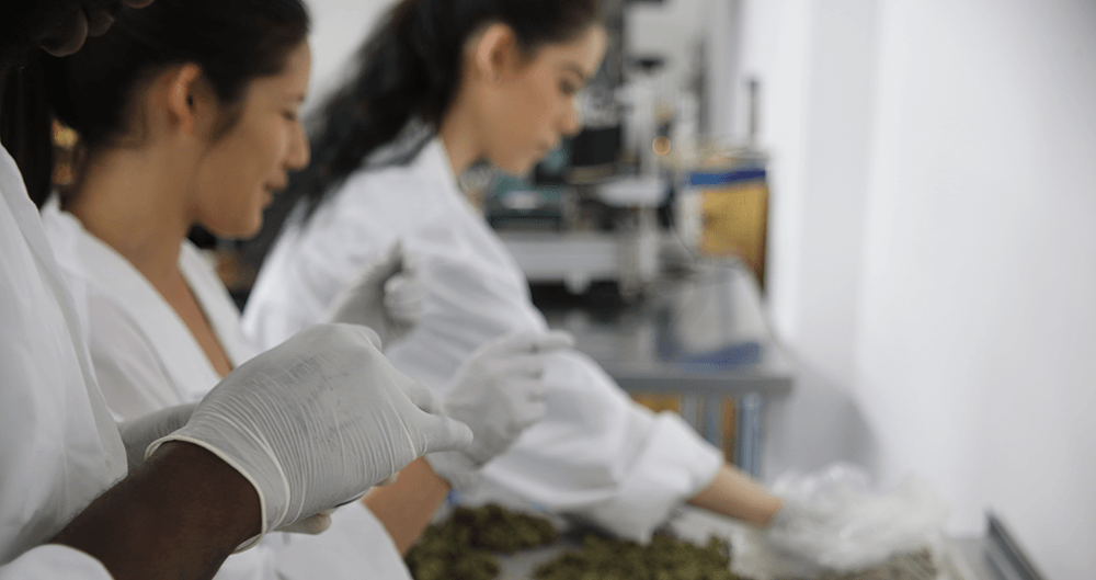 Safe Accessible Solutions blogs - SAS - cannabis jobs in Sacramento