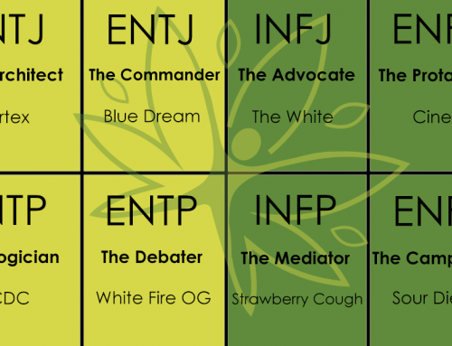 What Cannabis Strain You Should Be Smoking Based On Your Myers Briggs Personality Type Part 1