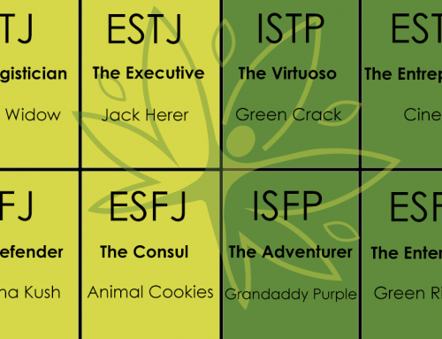 What Cannabis Strain You Should Be Smoking Based On Your Myers Briggs Personality Type Part 2