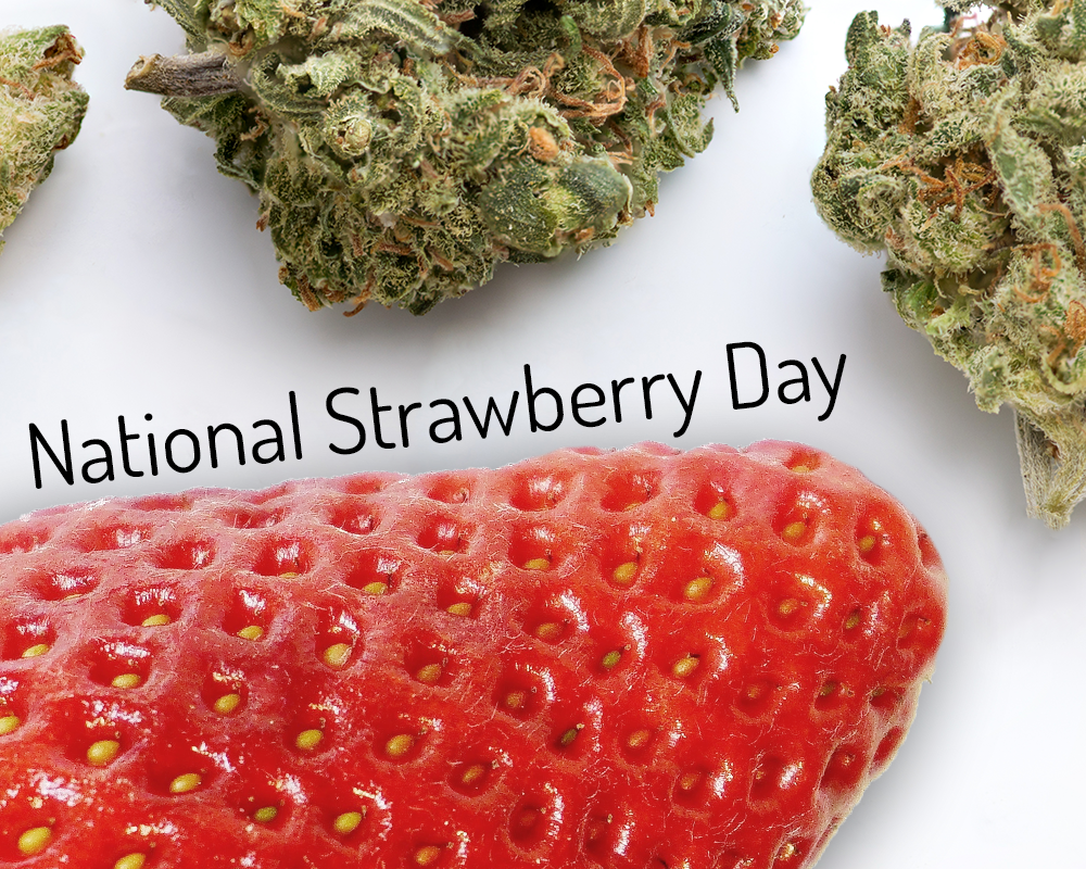 Safe Accessible Solutions blog - National Strawberry Day cannabis marijuana weed 420 strains strawberry flavor flavoring fruity holiday creative ideas funny edible medibles edibles February 27th